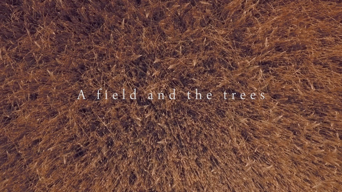 A field and the trees